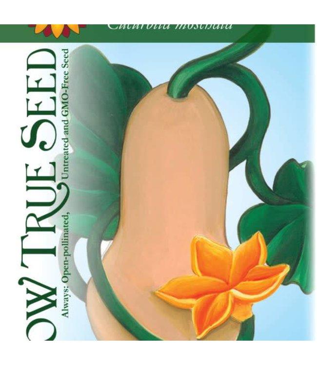 Sow True Seed Winter Squash - Waltham Butternut