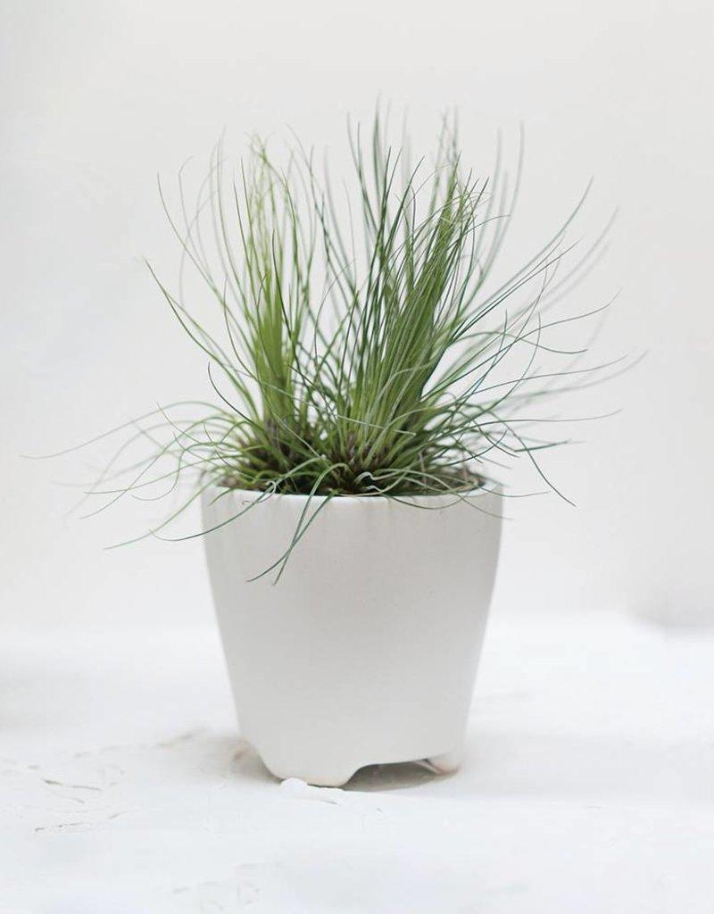 """Accent Decor 3"""" Ruth Pot ceramic container planter"""