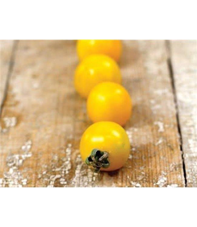 Baker Creek Tomato - Hartman's Yellow Gooseberry Seed