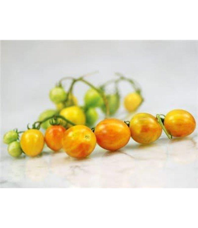 Baker Creek Tomato - Sunrise Bumblebee Seed