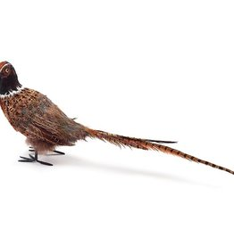 Pheasant with Long Tail