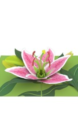 Lovepop Lily Bloom