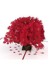 Lovepop Japanese Maple