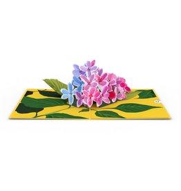 Lovepop Lilacs