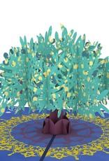 Lovepop Olive Tree