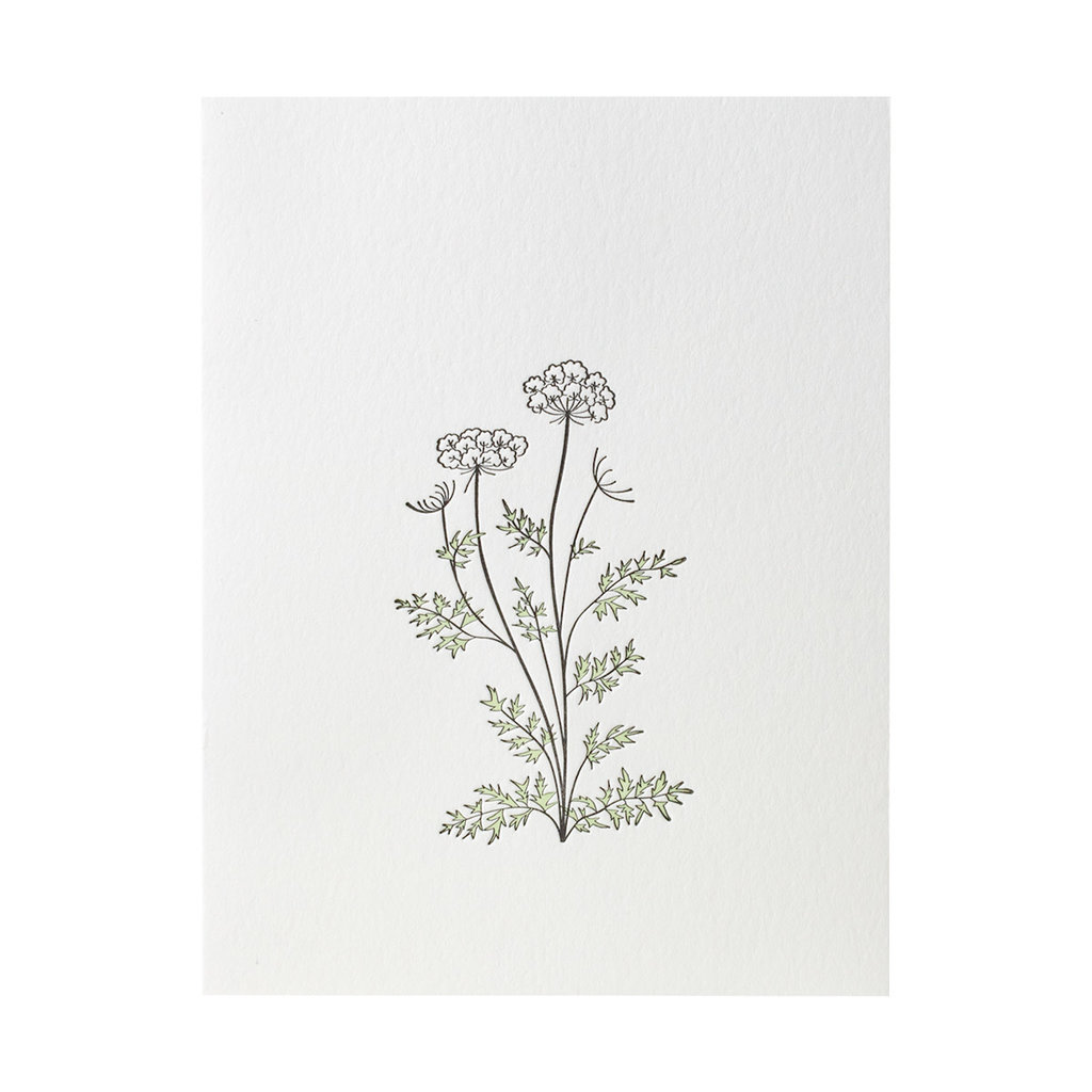 Green Bird Press Queen Anne's Lace Wildflower Letterpress Card