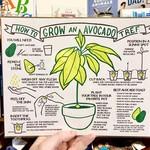 Big Wheel Press Grow An Avocado Tree Print