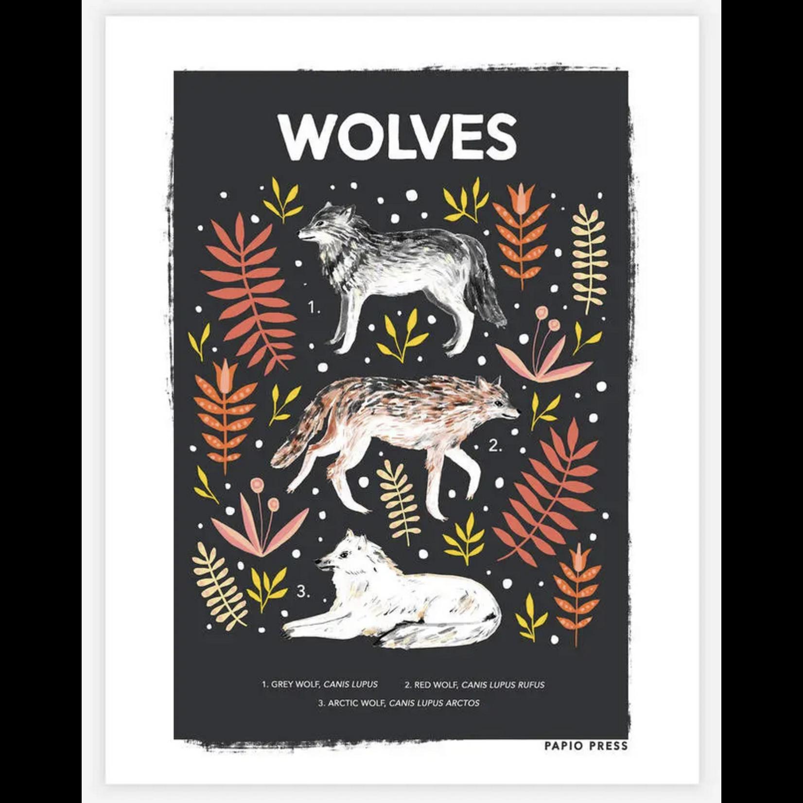 Papio Press Natural History Animal 8x10 Art Prints