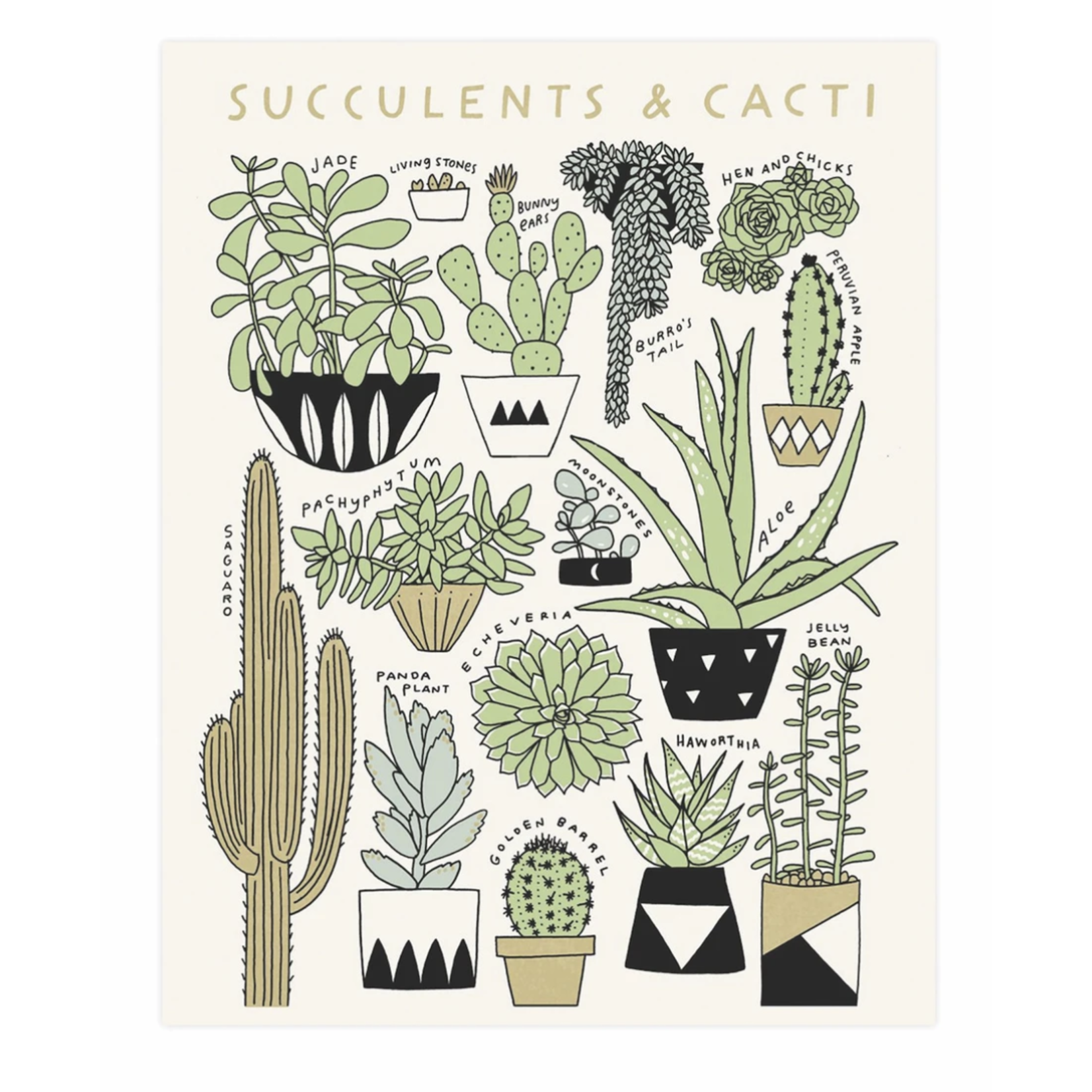 Worthwhile Paper Succulents & Cacti Botanical 11x14 Art Print