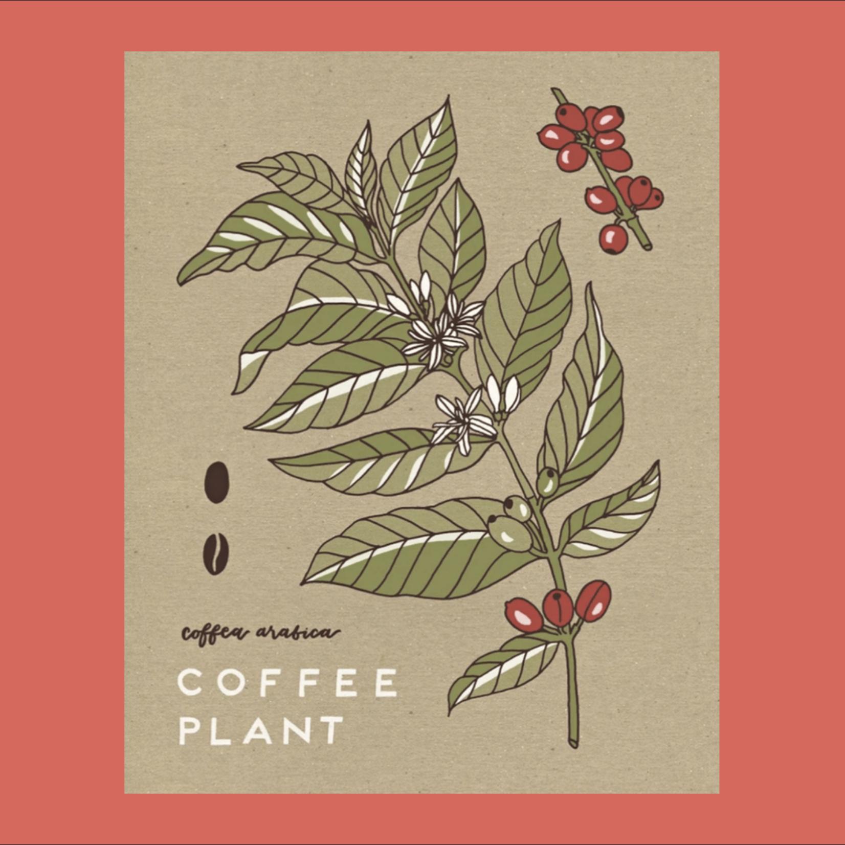 Worthwhile Paper Coffee Plant Botanical 11x14 Art Print
