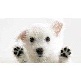 Puppy Socialization Module