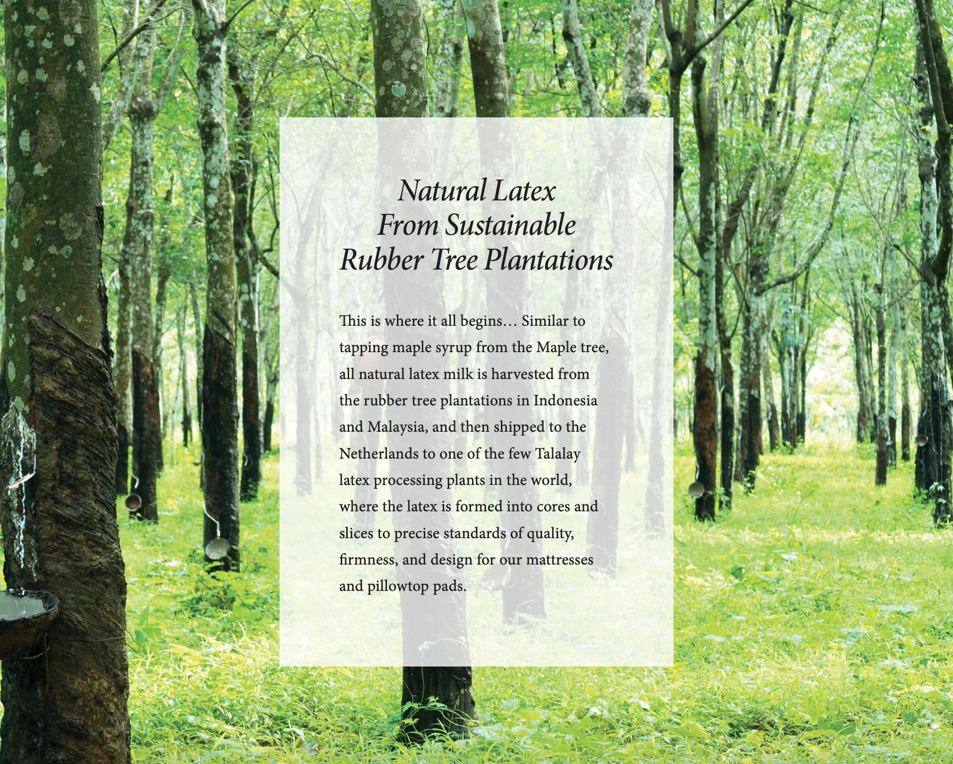 Royal Pedic Natural Latex