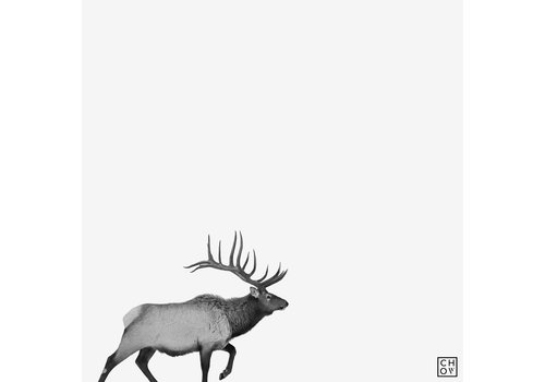 "Austin Chow ""Elk // Jackson, Wyoming"""