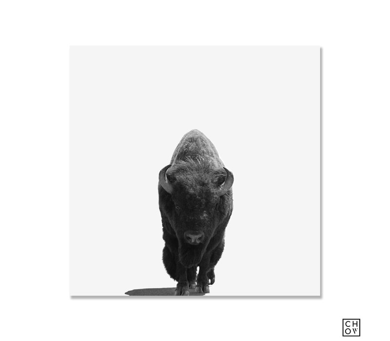 "Austin Chow ""Bison // Yellowstone"""