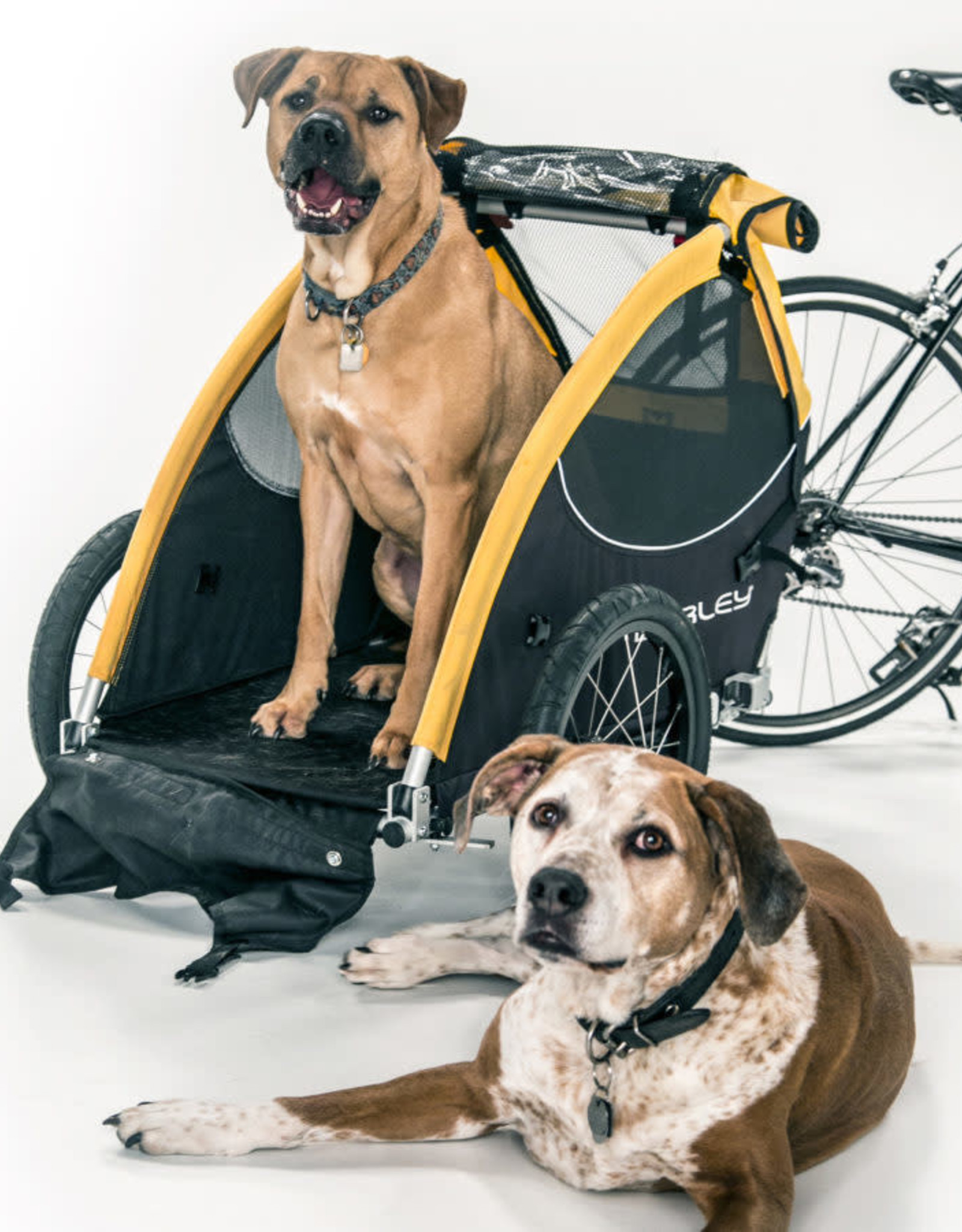 Burley Tail Wagon Dog and Pet Trailer