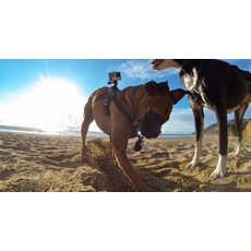 GOPRO GoPro - Fetch (Dog Harness)