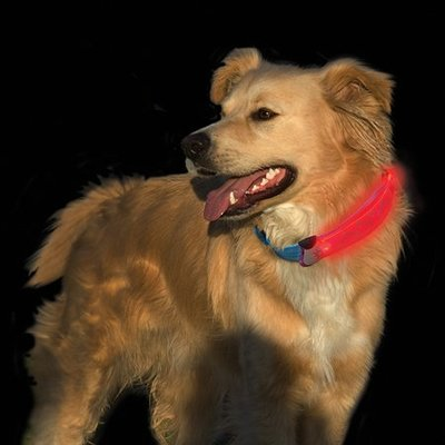 NITE IZE Nite Ize - Dawg Collar, Red - Large