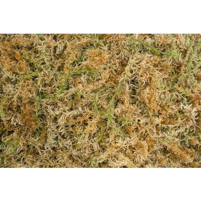 Besgrow Besgrow Spagmoss Sphagnum Moss - 150 gram