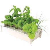 Indoor Gardening Salad Box Hydroponic Salad Garden Kit
