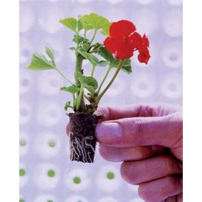 Propagation Starter Plugs - 1,500/case