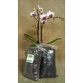 Orchiata Besgrow Orchiata Orchid Bark - Precision (3-6mm) - 2L