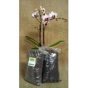 Orchiata Besgrow Orchiata Orchid Bark - Precision (3-6mm) - 2L