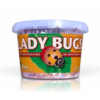 Pest and Disease Orcon Live Ladybugs - 500 count