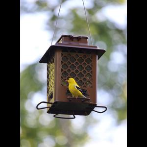 Home and Garden Stokes Select Squirrel Resistant Elegant Metal Bird Feeder