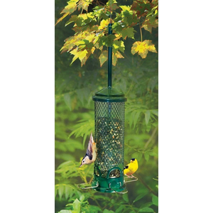 Brome Bird Care Squirrel Buster Squirrel Proof Bird Feeder