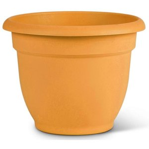 Bloem Bloem Ariana Earthy Yellow Planter - 8 in
