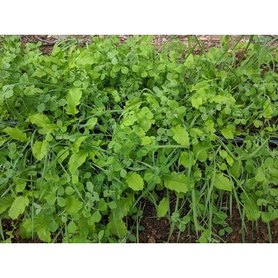 Fifth Season Gardening Co Fifth Season's House Cover Crop Blend - 1 lb