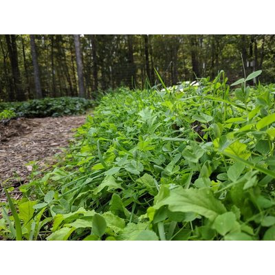 Welter Seed and Honey Co Fifth Season House Cover Crop Blend - 50 lb sack