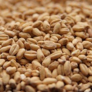 Canada Malting White Wheat Malt-Bulk