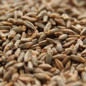 Beer and Wine Rye Malt-Bulk