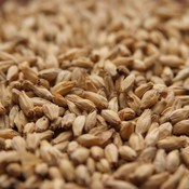 Beer and Wine 6-Row Malt - Canada Malting