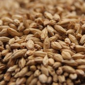 Beer and Wine Canada Malting Company 2-Row Pale Malt