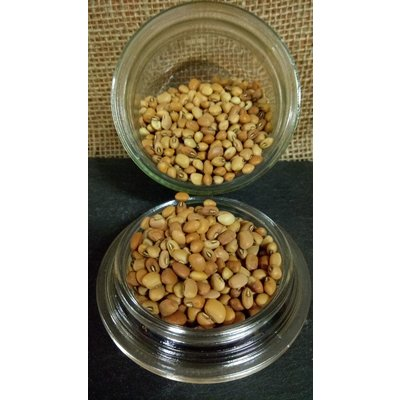 Outdoor Gardening Cover Crop-Cow Peas; 50lb