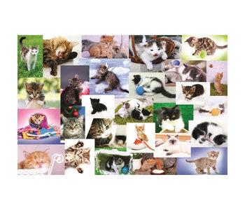 Monde de chats 60mcx