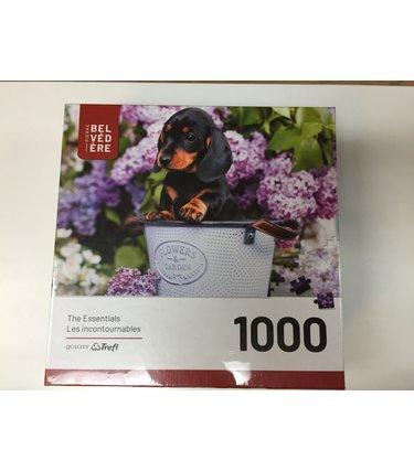Gentil Chiot - 1000 mcx