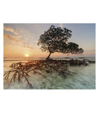 Red Mangrove - 1000 mcx
