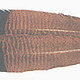 Wapsi Fly, Inc. Cinnamon Tip Turkey Tail, Grade #1,
