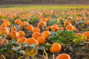 Pumpkin Packs A Powerful Health Punch