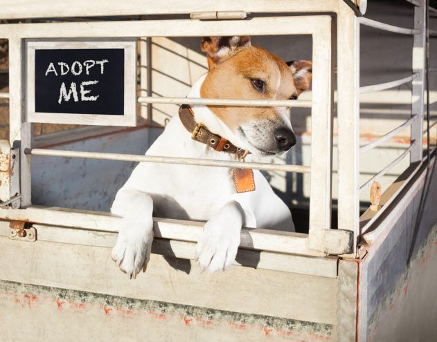 October Is Adopt-A-Shelter Dog Month