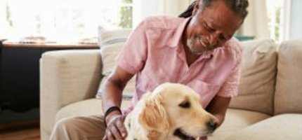 Chiropractic Care for Senior Dogs