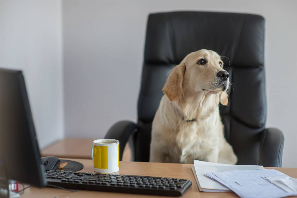 Another Take Your Pet to Work Week is in the Books