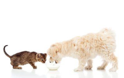 What Is Natural Pet Food?