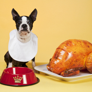 Thanksgiving Dangers for Pets