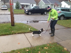 Loose Leash Walking: How to get your dog to walk with you
