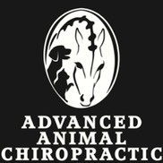 We Now Offer Chiropractic Adjustments for Your Pet!
