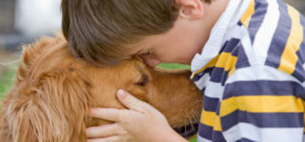 Cancer & The Important Role Of Diet And Lifestyle For Your Pet